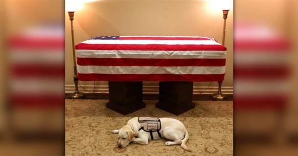 bush-service-dog-casket-today-main-181203_9de5b5e8b8fb1b3fdd67537267a2cc5a.1200;630;7;70;2