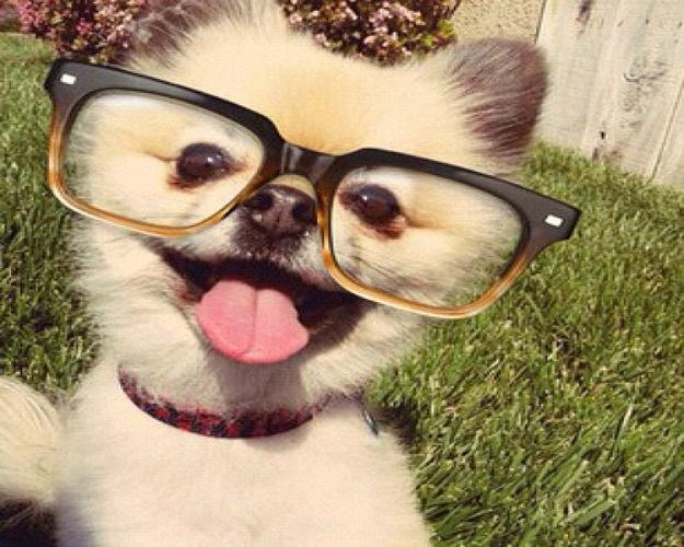 Aniumal glasses